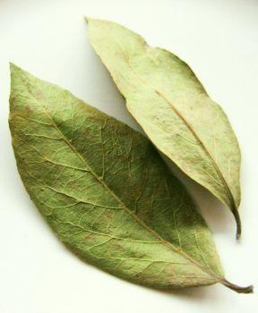 Tratamentul articulațiilor frunzelor