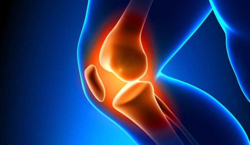 Cartilajele, deteriorarea meniscului, regenerarea
