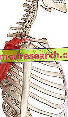 de ce doare mușchii articulației umărului brațului durere în articulația brațului și flexia degetelor