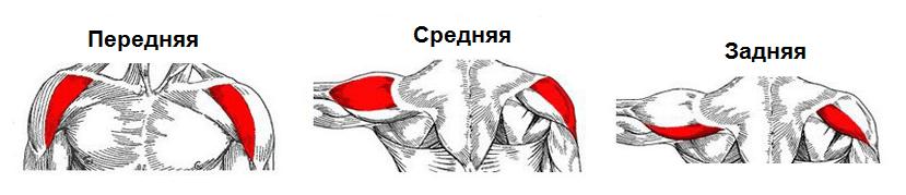 de ce doare mușchii articulației umărului brațului ligamentele din articulația umărului sunt rupte