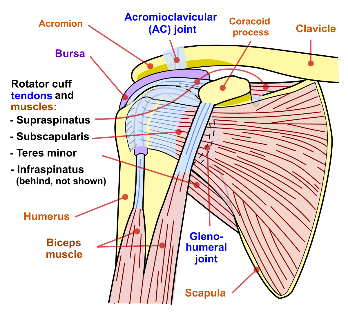 tratamentul unei wen pe articulația umărului artroza simptomelor și tratamentului coloanei toracice