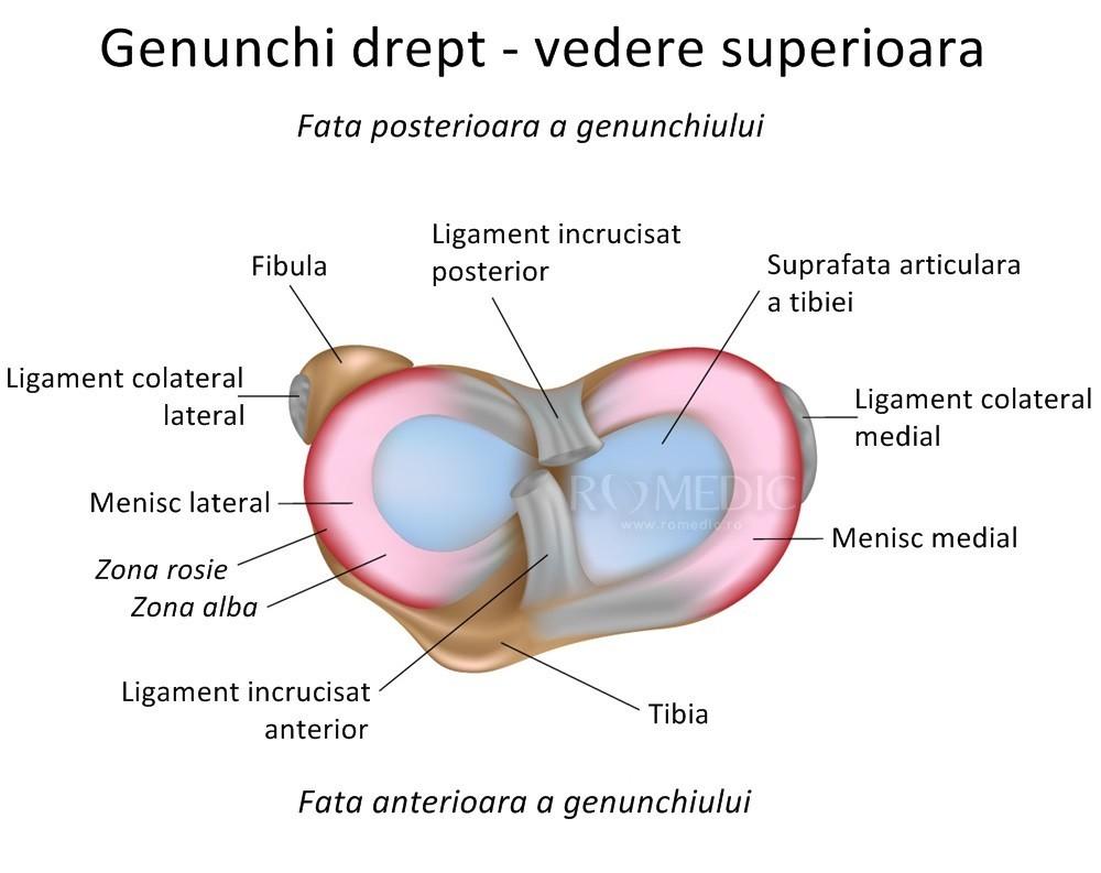 articulațiile genunchiului și cotului tratamentul leziunilor articulare la cot