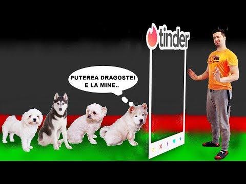 Cum să tratezi artrita la câini   sfantipa.ro