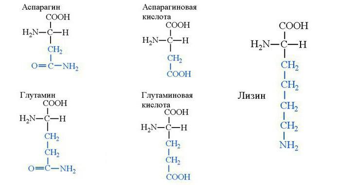 aminoacizi de restaurare a cartilajelor