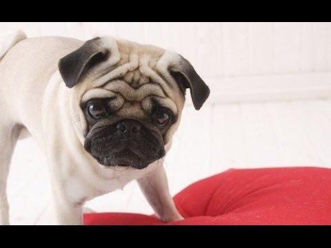 cum să tratezi artrita câinelui Unguent articular Dimexide