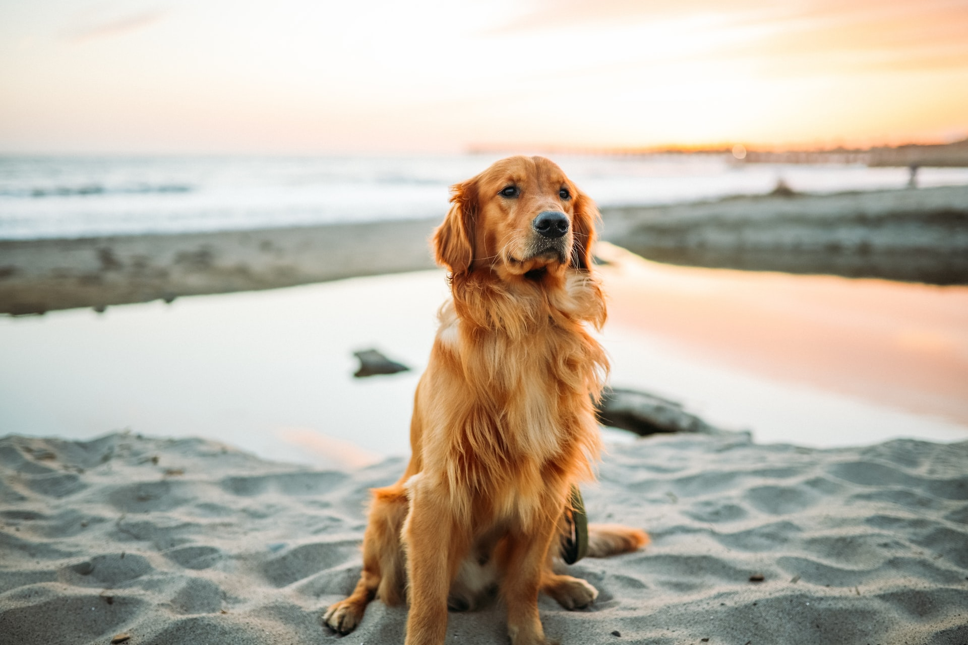 tratamentul articulațiilor părului de câine