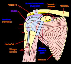 durerea în articulațiile mici ajută tratament articular caripazim