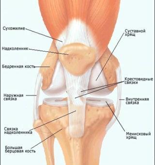 от боли в коленном суставе dureri articulare ce remediu tratament