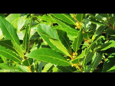 Dureri ale articulațiilor tratate cu plante medicinale