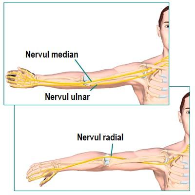 dacă articulația cotului doare în timpul extensiei