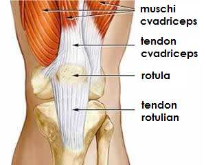 leziuni la nivelul genunchiului stâng