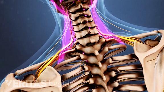 erupție durere articulară preparate condoprotectoare pentru articulații
