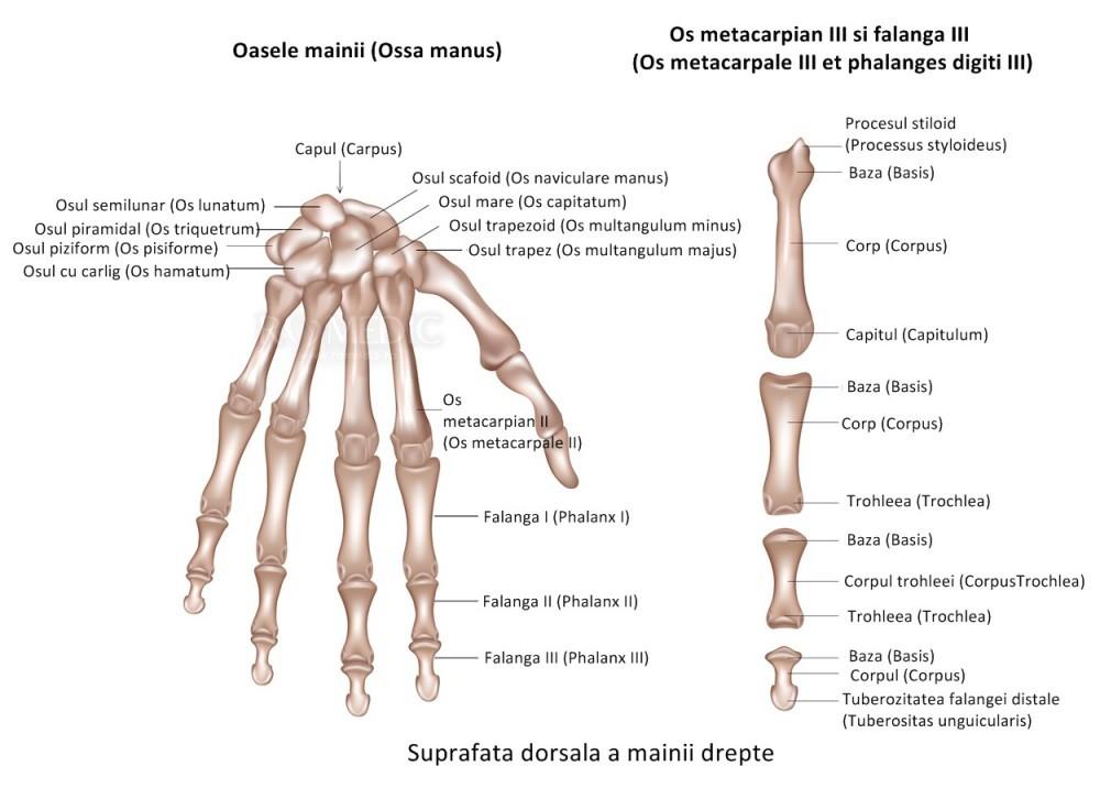 articulațiile interfalangiene pe mâini doare Semne de inflamație la șold