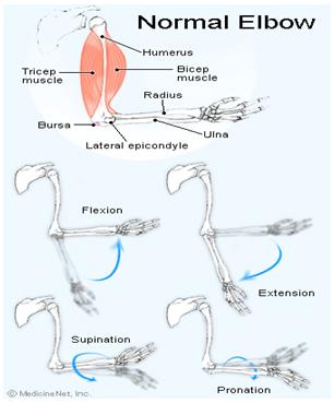 degetele dureroase ale articulației cotului amorțit