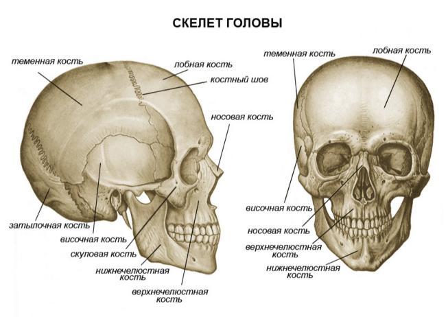 boli ale sistemului musculo-scheletic și țesut conjunctiv acesta entezopatie a genunchiului cum să tratezi