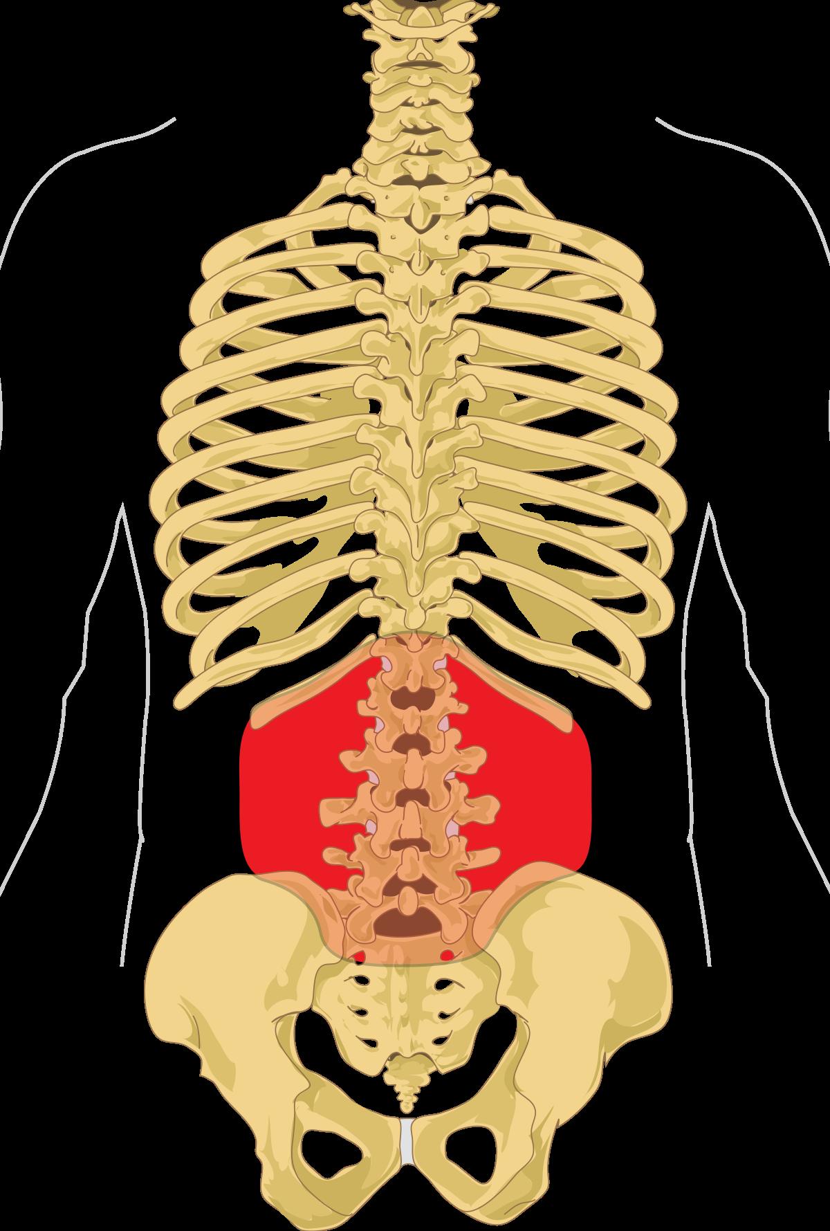 inflamația ligamentelor în articulația șoldului leziuni articulare în tratamentul sportivilor
