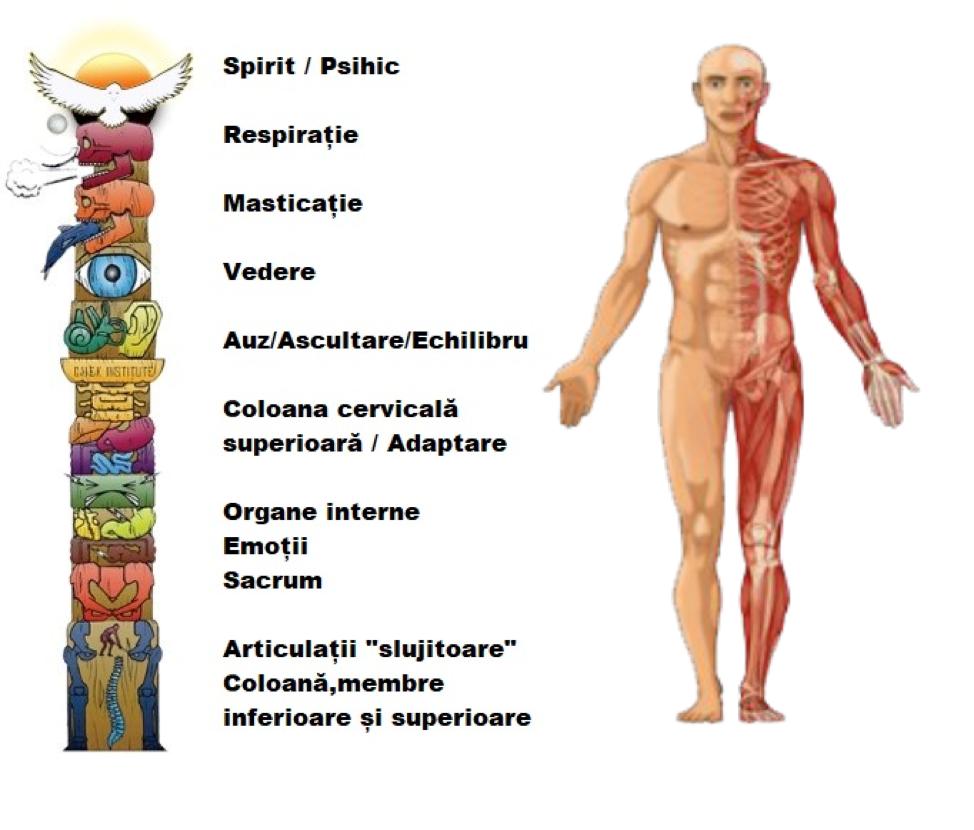 dureri articulare și lipsa respirației Tratamentul antetorsiei articulației șoldului