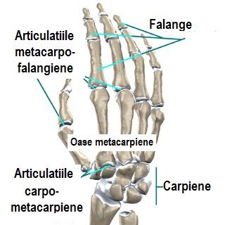 articulațiile genunchiului rănesc din cauza efortului
