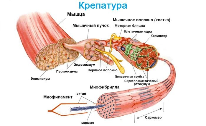 dureri articulare și musculare în oncologie