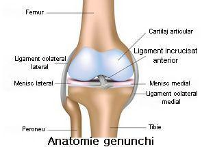 Metode de refacere a cartilajului articular   sfantipa.ro