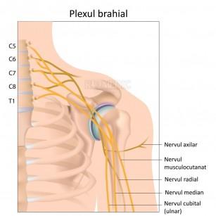 cum se poate îmbunătăți cartilajul articulațiilor