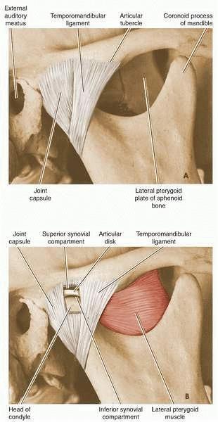program de boală comună gimnastică pentru tratamentul artrozei umărului
