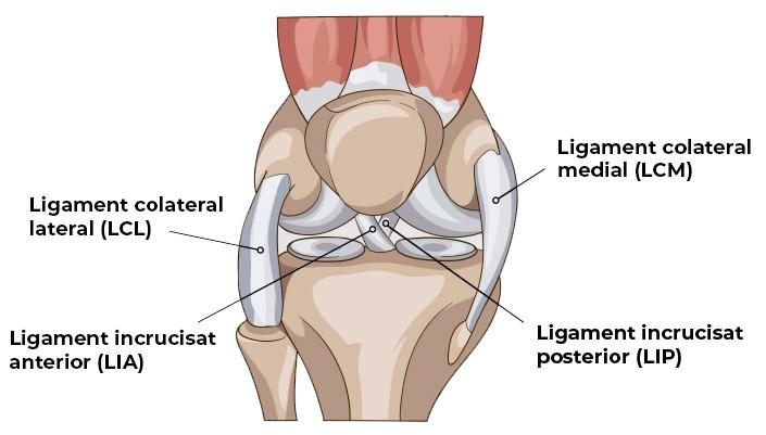 ce durere atunci când ligamentele genunchiului pulverizat degetele durerii articulare nu se îndoaie