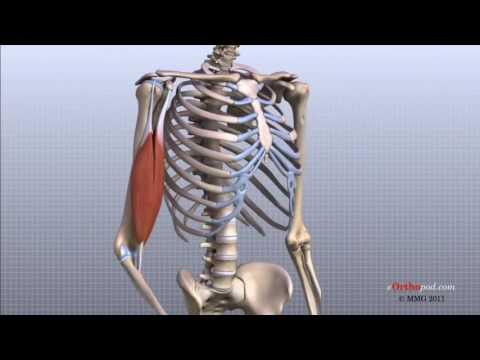 dureri de stomac cremă articulară recenzii