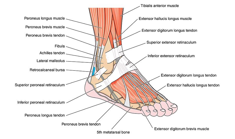 articulația gleznei cu leziuni sportive