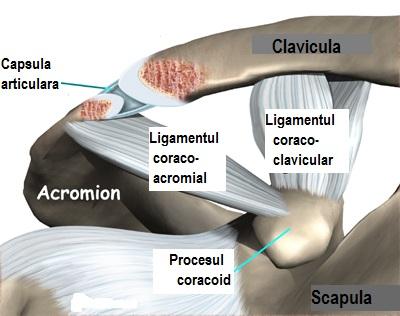 Boala articulară a sternului clavicular - Argila pentru tratamentul artrozei