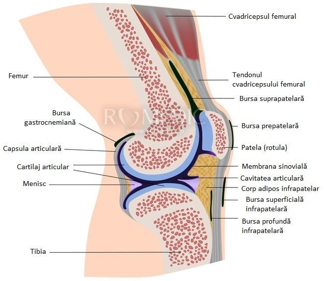 inflamația măduvei osoase în articulația genunchiului