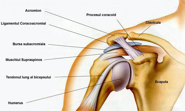 durere la nivelul articulației umăr și umăr ruperea tratamentului ligamentelor gleznei