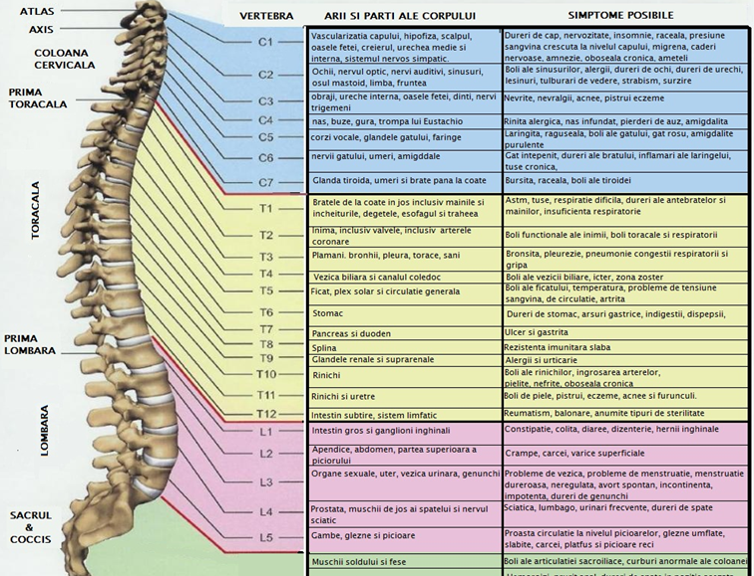 tratamentul articulației spinale