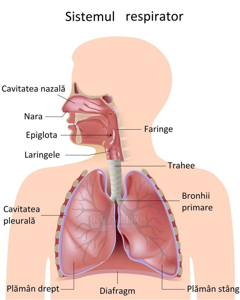 Tratamentul bronhiilor și articulațiilor - Etiologie:
