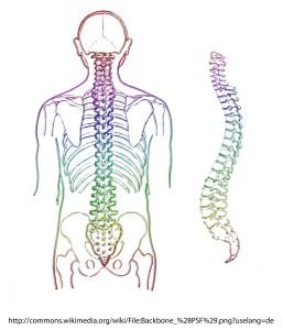 cum doare articulația coloanei vertebrale creme eficiente pentru osteochondroza cervicală