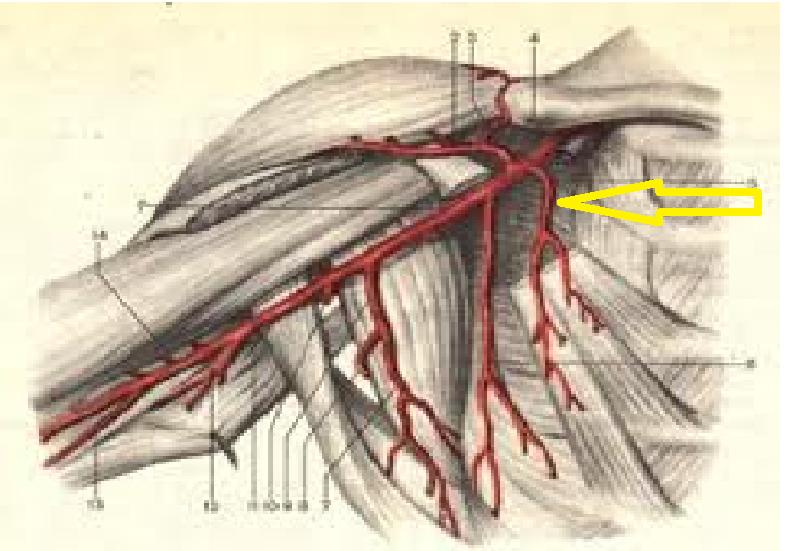 fenomene inițiale de artroză a articulațiilor arcuite tratament seric articular