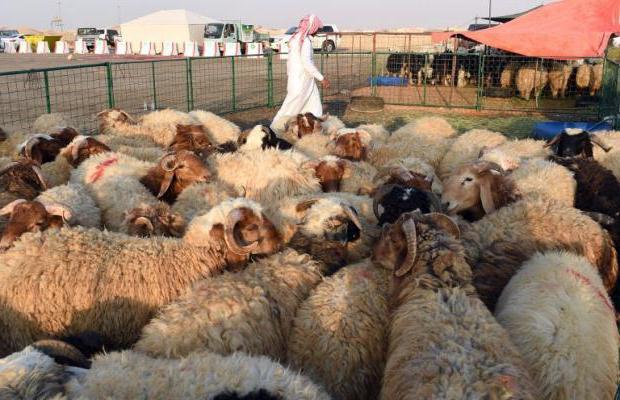 boala articulației oilor atrăgând durerile din articulația șoldului