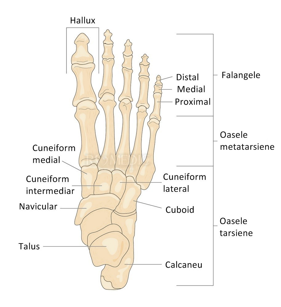 durere în articulațiile metatarsiene pe un picior