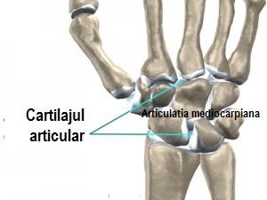 Articulațiile medicinii piciorului - sfantipa.ro