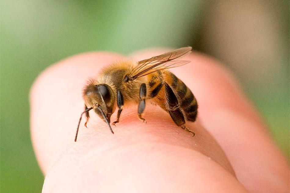 albine tratamentul artrozei cu albine