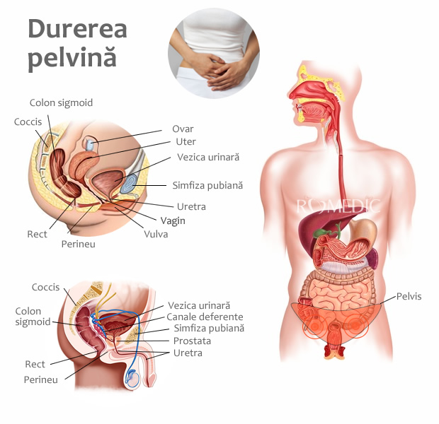 Sub sarcină, durere în articulația umărului - sfantipa.ro