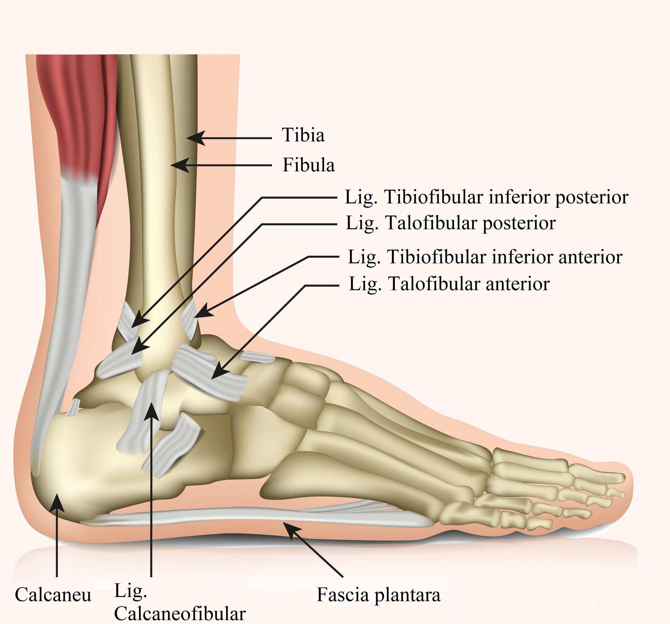 articulația pe inflamația piciorului Chondroitin 250