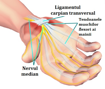 articulația sinovială a degetului inelar doare artroza degetului cum se tratează recenziile