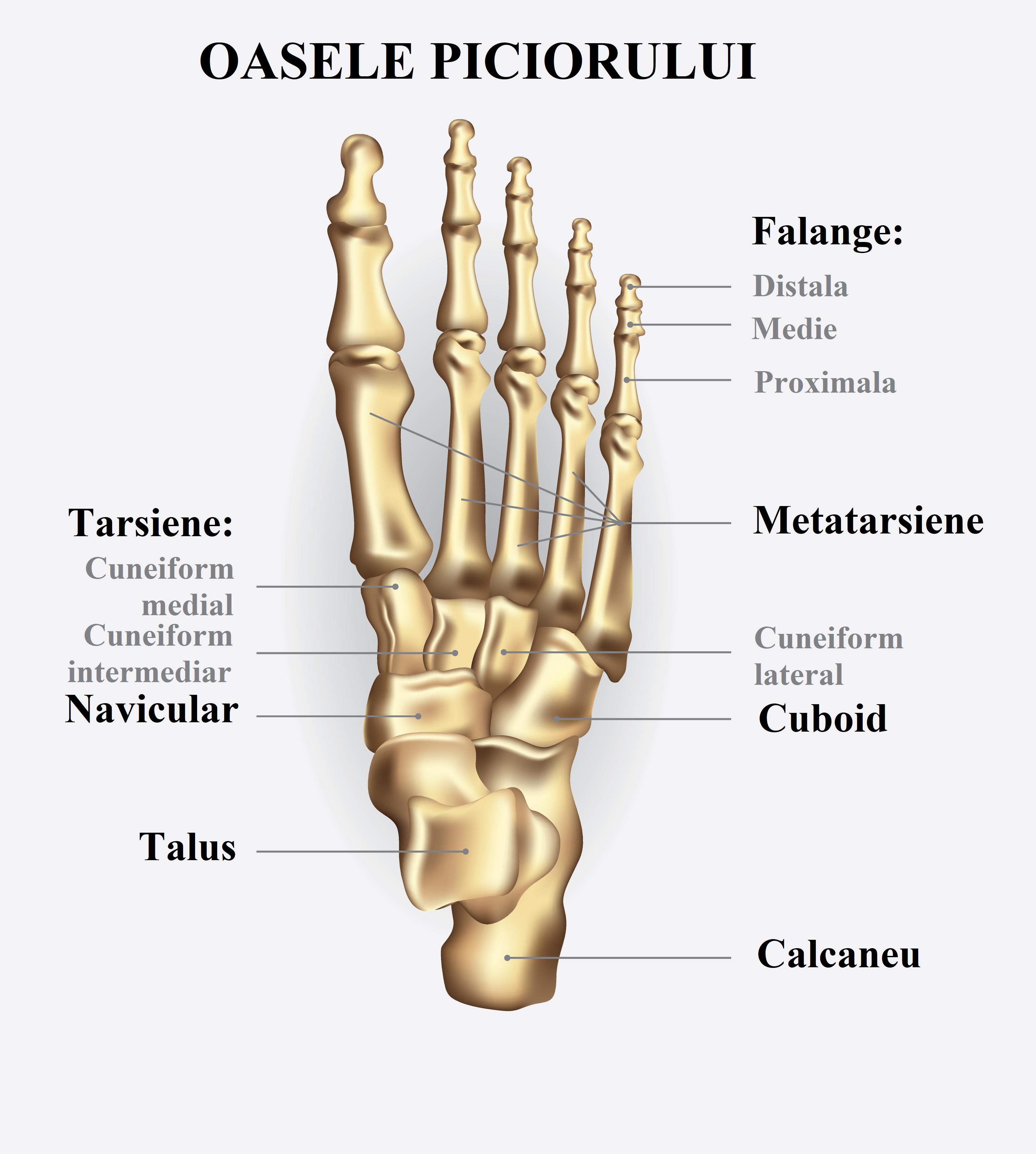 articulațiile de pe osul piciorului doare durere de umăr teraflex