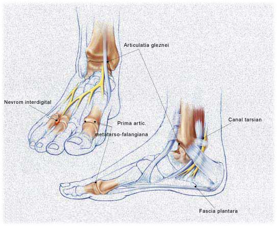 Articulațiile piciorului dimineața