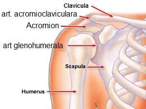 articulațiile umărului doare după exercițiu