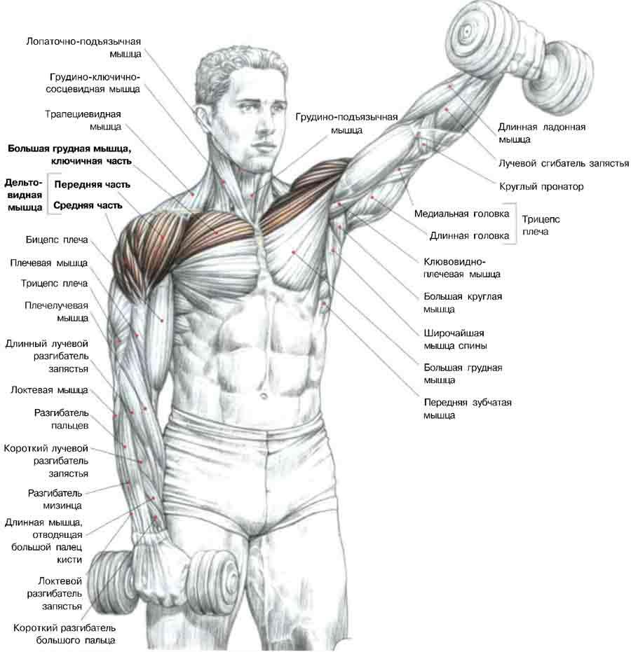 articulațiile umărului rănit nu ridică brațele