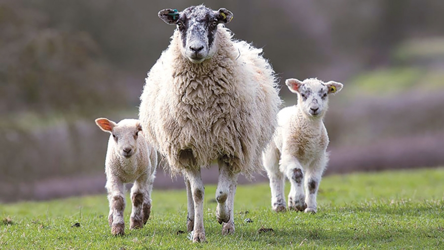 boala articulației oilor cu dureri articulare cu răceală