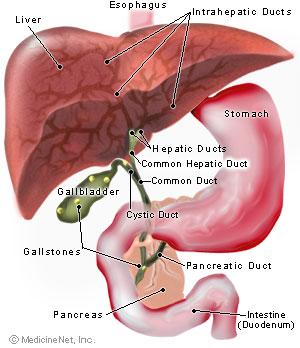 stagnarea bilei și a durerilor articulare depresie musculară și articulară