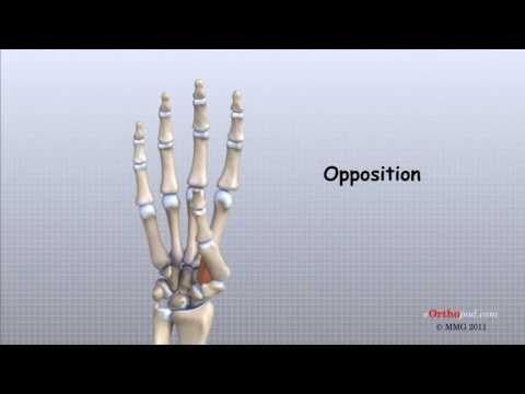 dureri hepatice și dureri la nivelul articulațiilor artrita tratament cu guta artrita